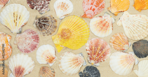 Natural background of color seashells on the sand Fototapet