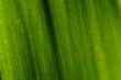 Zielowy liść tekstura makro