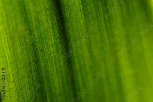Fototapeta Zielowy liść tekstura makro obraz