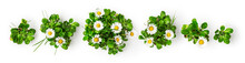 Daisy Flowers Creative Banner