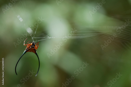 Canvas Print Long Horned Spider in web spider