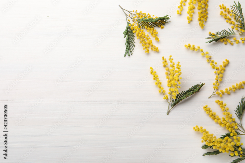 Fototapeta Beautiful mimosa flowers on white wooden table, flat lay. Space for text