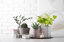 Beautiful Scindapsus, Aloe And Cactus In Pots With Decor On Grey Table Against White Brick Wall. Different House Plants