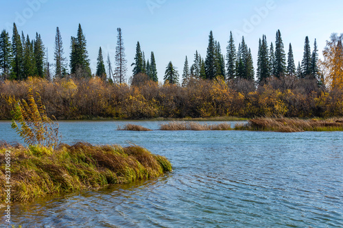 Fototapeta Autumn banks of the small taiga river Yaya