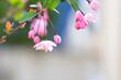 canvas print picture - 봄에 피는 귀여운 분홍색꽃