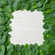 Border Of Fresh Green Leaves Spinach On A Wooden Background.