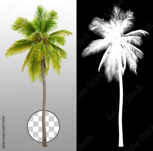Cut out palm tree. Green tree isolated on transparent background via an alpha channel. Cutout coconut tree. High quality clipping mask for professional composition.  Wall mural