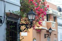 Zona Colonial, Republica Dominicana - Marzo 28 2021 - Bellas Estructura Urbana En La Zona Colonial, Lampara Antiguas Y Bellas Flores Bougainvillea Color Rosado