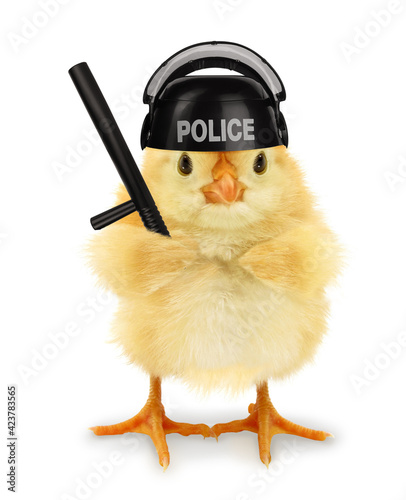 Obraz Cute cool chick cop policeman with police baton funny conceptual image - fototapety do salonu