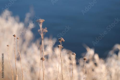 oświetlone słońcem trawy nad brzegiem rzeki