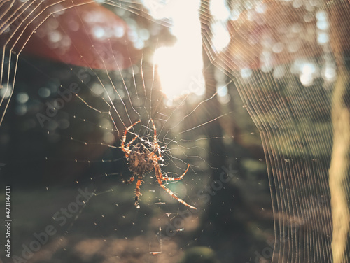 Foto spider in the web