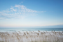 USA, North Carolina, Tall Grass On Beach