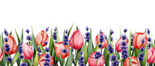 Watercolor Background With Red Tulips Foleta Lavender. Spring Illustration. Suitable For Banners, Postcards, Brochures, Invitations, Etc..