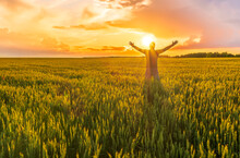 A Man Stnding And Watching Sunset In A Wheaten Shiny Field With Golden Wheat And Sun Rays, Deep Blue Cloudy Sky And Rows Leading Far Away, Valley Landscape