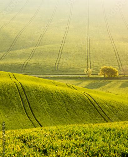 Majestic rural landscape in sunny day. Beautiful sunlight on the wavy fields.