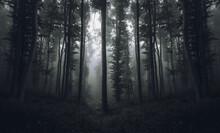 Natural Misty Forest Landscape Baclground