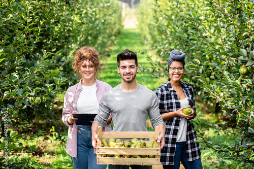 Photo Young farmers working in orchard examining quality and picking pears