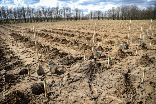 Fotografija Planting trees on arid soil to fight against desertification