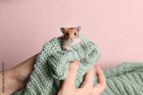 Obraz Woman holding cute little hamster on green knitted sweater against pink background, closeup - fototapety do salonu