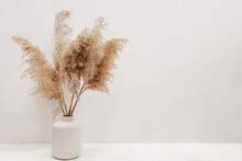 Pampas Grass In A Vase Near White Wall.