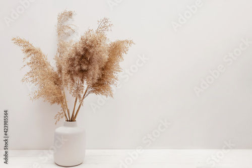 Fototapeta Pampas grass in a vase near white wall. obraz