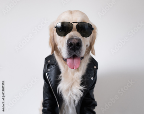 Cuadros en Lienzo A dog in a leather jacket and sunglasses obediently sits with his tongue out