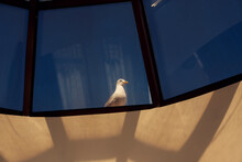 Seagull On A Window