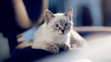 Portrait Of A Kitten Of Thai Breed.