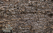 Log Close Up, Sawn Tree Side View Of Sharp Parts Of Felled Log. Wood Textured Wall For Background Or Design. Old Stump Texture.