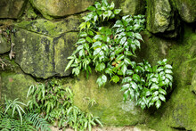 Green Vegetation On Wall With Moss