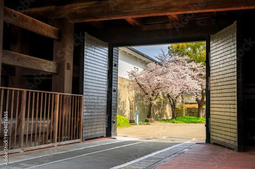 Fotografia 大阪城多聞櫓と桜