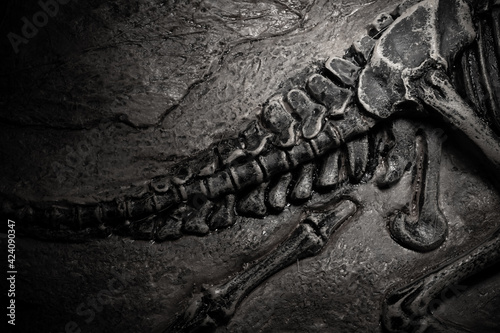 Fotografia, Obraz top view dinosaur skeleton fossil of the tail part with details