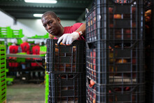 Confident African American Employee Working At Fruit Warehouse Carrying Box With Peaches In Storage