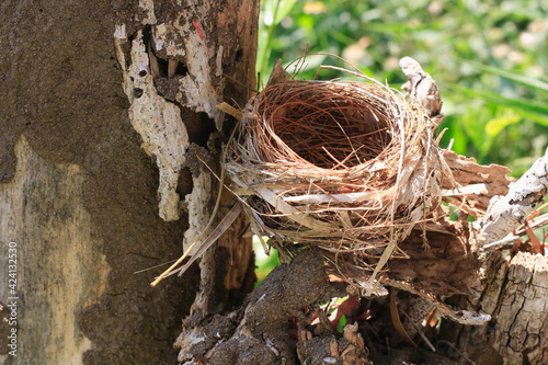 Obraz na plátně The bird's nest is laid bare and old abandoned on dry, outdoor stumps