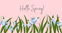 Hi Spring Spring Postcard. Primroses And Lilies Of The Valley. First Flowers.horizontal Format.Vector Illustration