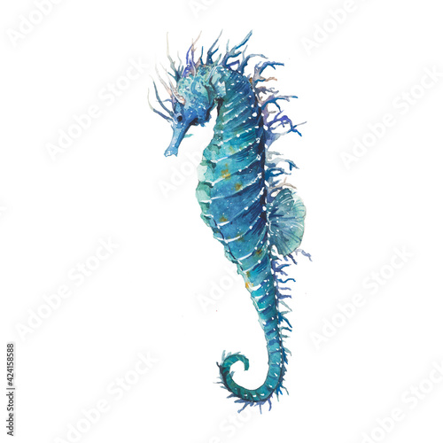 Obraz Watercolor blue sea horse illustration. Seafood object isolated on white background. Marine animal artwork - fototapety do salonu