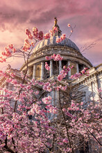 The Iconic St. Pauls Cathedrale In London, United Kingdom, With Colorful Cherry Blossoms In Front During Sunset Time