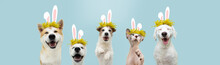 Banner Happy Easter Pets Cat And Dog Spring. Funny  Cat And Dogs Wearing Bunny Ears And Floral Crown.Isolated On Blue Colored Background.