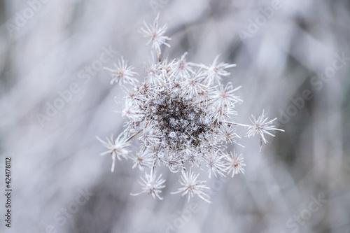 Fototapeta Kwiaty, natura przed wiosną obraz