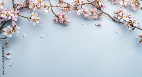 Obraz Flowering Spring, sakura blossoming branches on light blue background with bokeh, light. Happy Easter holiday, top view, banner - fototapety do salonu