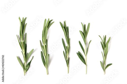 Fototapeta fresh green rosemary isolated on white. top view. elements for design obraz
