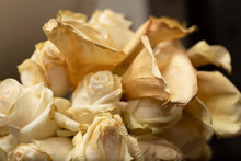 A Closeup View Of A Bouquet Of Elegant Roses And Lilies That Are Dramatically Wilted.