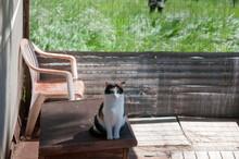 Cat Sitting In A Barn