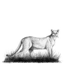 Wildlife Illustration 2