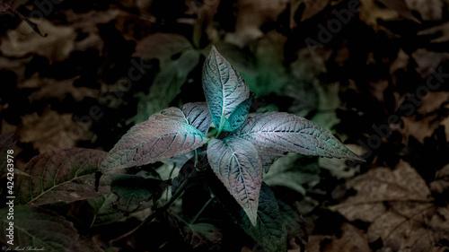 Fototapeta piękne tajemnicze, bajkowe liście  obraz