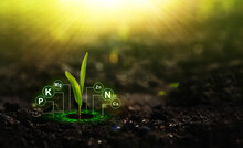 Fertilization And The Role Of Nutrients In Plant Life.Plants On Sunny Background With Digital Mineral Nutrients Icon.