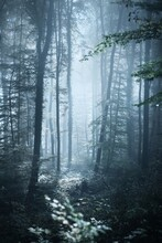 Pathway (tunnel) In A Majestic Beech Forest At Sunset. Mighty Trees. Mysterious Blue Light, Fog. Moon, Twilight, Night. Dark Picturesque Scenery. Wanderlust, Silence, Gothic, Fairy Tale Concepts