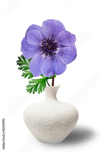 Fotografía One blue anemone in a white vase in the style of the seventies on the table with books as an interior decoration