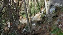 Laurel Falls Waterfall