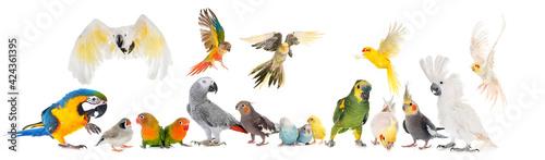 Obraz na plátně group of birds